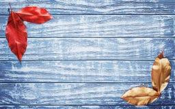 Blätter von roten, gelben Farben auf einem blauen hölzernen Hintergrund Stockfotos