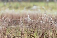 Blätter von Spinnennetzen und -spinnen auf Vegetation nach Fluten Lizenzfreie Stockbilder