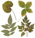 Blätter von verschiedenen Blumen und von Bäumen Stockfotos