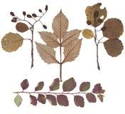 Blätter von verschiedenen Blumen und von Bäumen Stockfoto