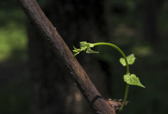 Blätter werden der Sonne ausgesetzt lizenzfreie stockfotografie