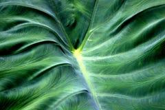Blätterteigplätzchen auf weißem Hintergrund lizenzfreies stockfoto