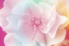 Blå bakgrund för blomma Royaltyfria Foton