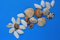 blå bakgrund med olika havsskal Royaltyfria Bilder