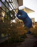 Blå björn på den Denver konventcentret Arkivfoton