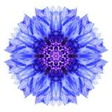 Blå blåklint Mandala Flower Kaleidoscope Isolated på vit Royaltyfri Fotografi