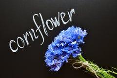 Blå blåklintbukett Fotografering för Bildbyråer