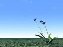 blå blåklintillustration Fotografering för Bildbyråer