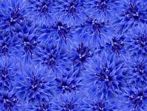 blå blom- blommafjäder för bakgrund Arkivfoto
