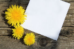 blå blom- hälsning för kortdesign Royaltyfria Bilder