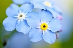 blå blomma arkivfoto