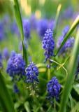 blå blomma Arkivbild