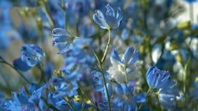 Blå blomma - bild royaltyfri fotografi