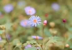 Blå blomma i busken arkivbilder