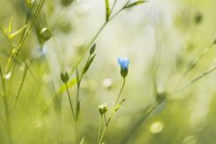 blå blomma i en sommarträdgård royaltyfria bilder