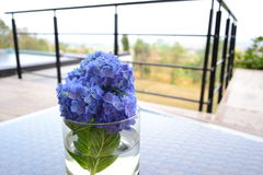 Blå blomma i exponeringsglaset Arkivbilder