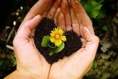 Blå blomma i händer Fotografering för Bildbyråer