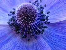 blå blomma little Arkivfoton