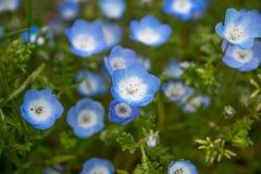 Blå blomma med det gröna bladet Royaltyfria Bilder
