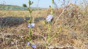 Blå blomma med gräsplan Arkivfoto
