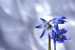 Blå blomma och copyspace arkivbild