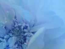 Blå blomma på den genomskinliga blåa suddiga bakgrunden Närbild alla några objekt för den blom- illustrationen för sammansättning Arkivbilder
