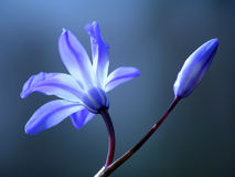 blå blommafjäder Royaltyfria Bilder