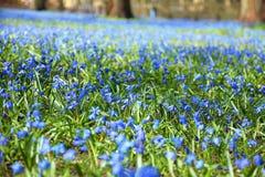 blå blommafjäder Royaltyfri Bild