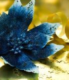 blå blommajulstjärna Arkivbilder