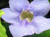 blå blommasky Royaltyfria Bilder