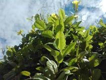 blå blommaskyyellow arkivfoto