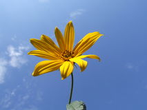 blå blommaskyyellow Royaltyfri Bild