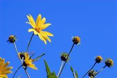 blå blommaskyyellow Royaltyfri Foto