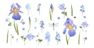 Blå blommauppsättning Arkivbild