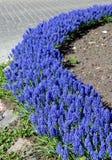 blå blomsterrabatt Fotografering för Bildbyråer