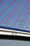 blå brosky Royaltyfri Fotografi