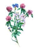 Blå bukett för blåklint-, saponaria- och rosa färgväxt av släktet Trifoliumtreklöver Royaltyfria Foton