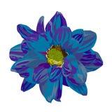 blå chamomile vektor illustrationer