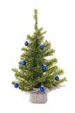 blå chris jultree Arkivfoton