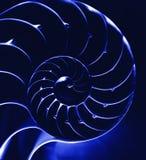 blå closeupnautilus Arkivbild