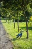 Blå cykel som lutas mot ett träd Royaltyfri Bild