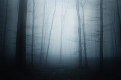 Blå dimma i läskig skog royaltyfri foto