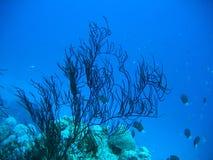 blå djup lampa Royaltyfria Bilder