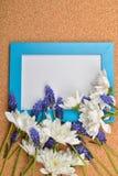 Blå druvahyacint och vitkrysantemum på den tomma svart tavla arkivfoto