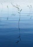blå etude Fotografering för Bildbyråer