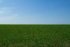 blå fältgreensky Fotografering för Bildbyråer