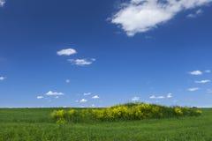 blå fältgreensky arkivfoto