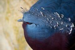 Blå fågel Royaltyfria Foton