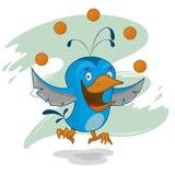 Blå fågel Arkivbilder