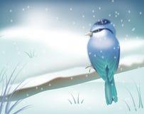 Blå fågel i vinterlandskap Royaltyfria Bilder